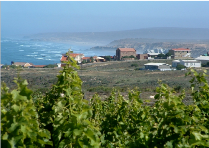 Winyards with a seaview